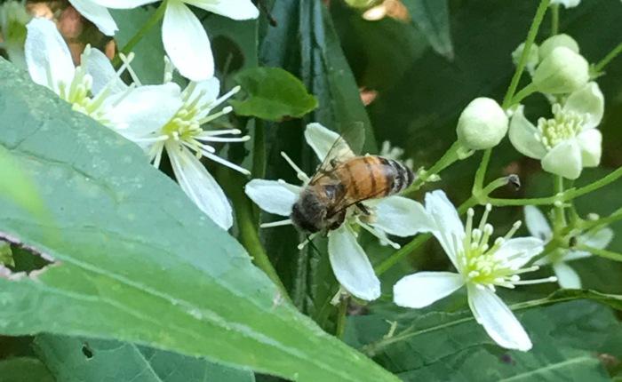 Bees in West Virginia